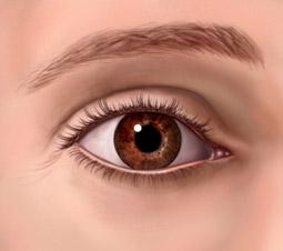a felső szemhéj condyloma